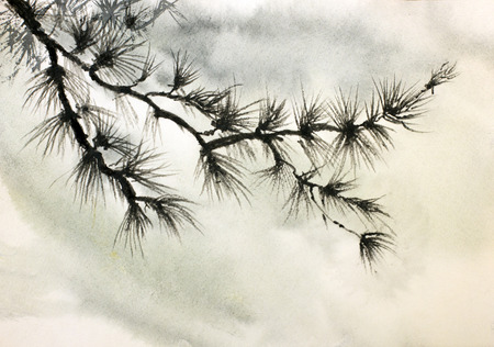 pine branch against the sky photo