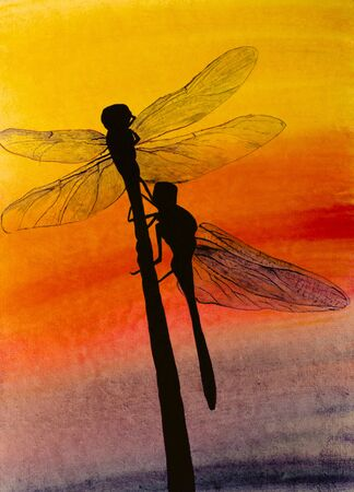 dragonfly: two dragonflies on grass at sunset Stock Photo