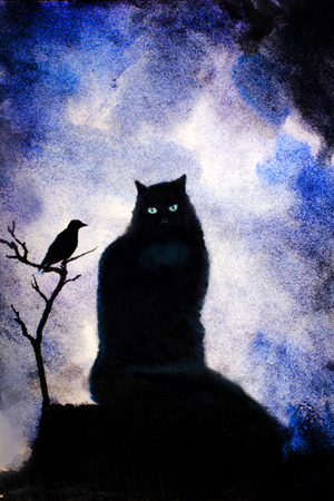 crows: black cat with green eyes and crows