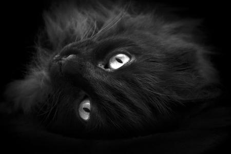 노란색 눈을 가진 검은 고양이