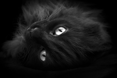 amarillo y negro: Gato negro con ojos amarillos  Foto de archivo