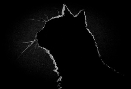watchful: silhouette of a cat in the dark