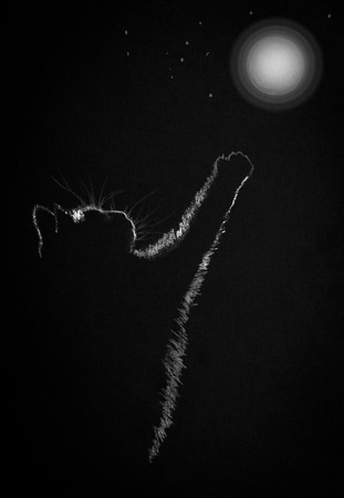 small cat pulls a paw to the moon