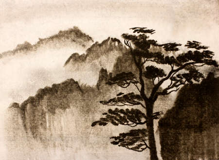 thick: Mountain pine trees and thick fog