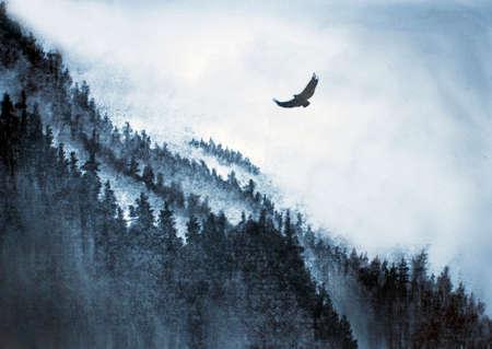 fog: mountains fog pine and Eagle