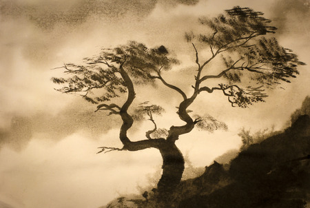 winding pine on the edge of the mountain