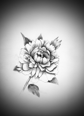 black and white image drawing: peony flower drawn in pencil