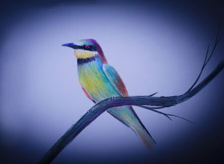 fascinate: beautiful and very colorful bird on a branch Stock Photo
