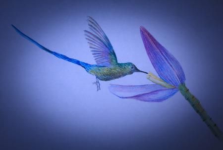 hummingbird: small bird hummingbirds and beautiful flower