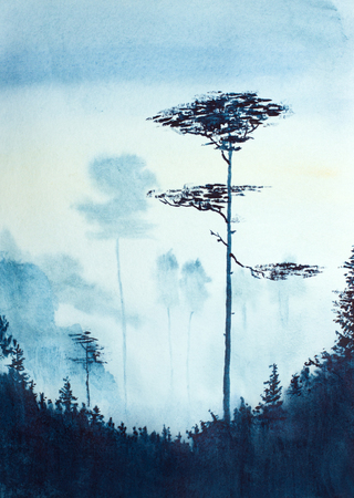 morning misty landscape with pines