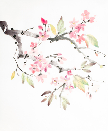branch of cherry blossoms on a light background Imagens