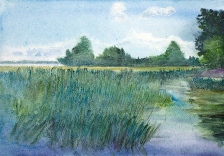 summer landscape with lake and reeds Stock Photo