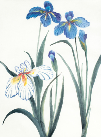 blue and white flowers of iris on a light background Imagens