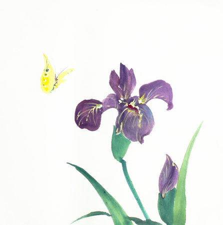 iris flower and butterfly on a light background Stock Photo