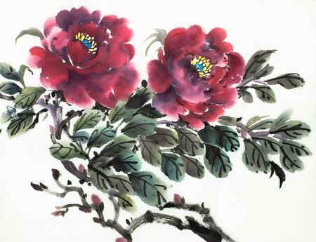 burgundy peony flower on a light background