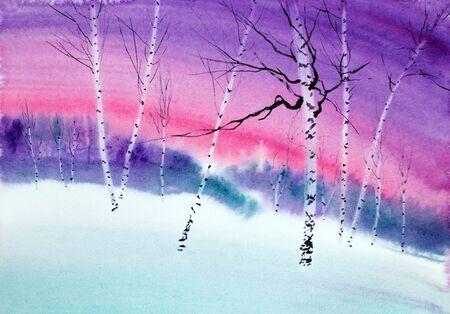 delicate white birches in winter sunset Stock Photo