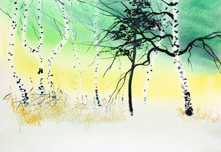 winter white birch trees at yellow-green sunset