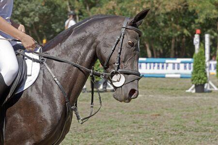 Horse caparisoned in close-up Stock Photo - 17902080