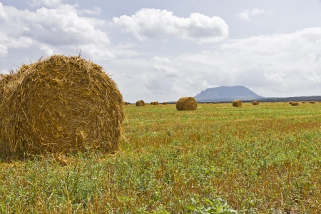 Field after harvest ,straw, sky and mountains