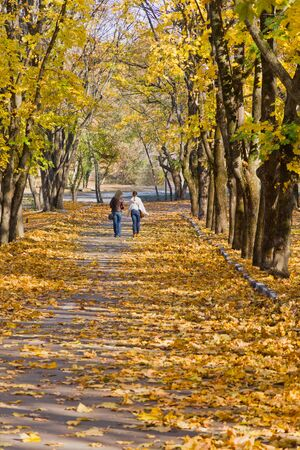 Girls are walking on a path in autumn park Stock Photo - 18199041