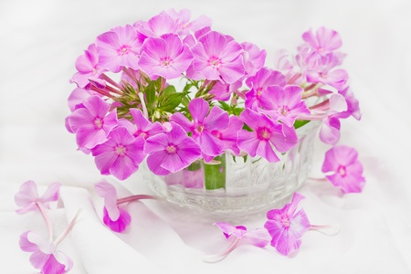 Bouquet of pink flowers in a vase. Stock Photo