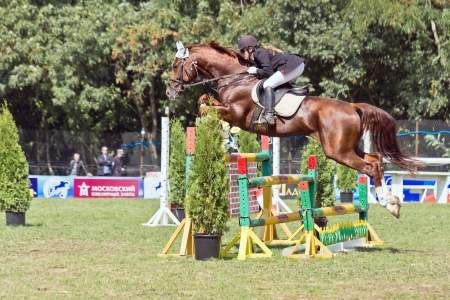 Show jumping The horse and rider overcomes obstacle  Stock Photo