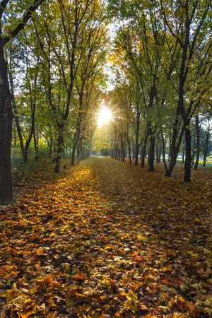 The rising sun in the morning in the autumn park. Stock Photo