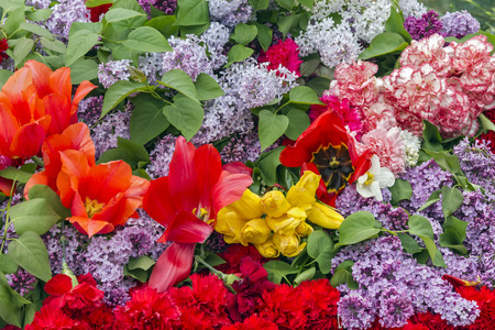 Background of flowers pinks, lilacs and tulips.