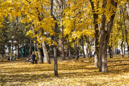 spangled: City park spangled with yellow fallen leaves.