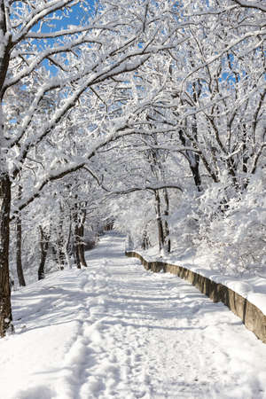 walking paths: Walking paths among trees in the winter forest covered with snow.
