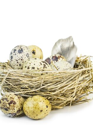 quail nest: Feather and motley quail eggs in a nest of grass on a white background. quail feather.
