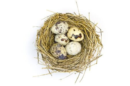 quail nest: Quail eggs in a nest on a white background.
