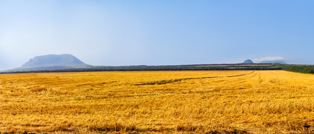 Wheat field after harvest with trees and mountain in the background.