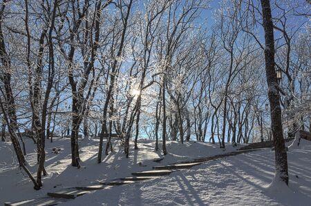 Snowbound winter park on a sunny day. Stock Photo