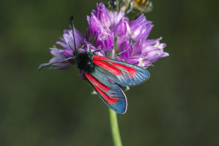 Seated on a flower butterfly with brightly painted wings. Stock Photo