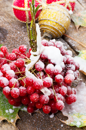 sprinkled: first snow has sprinkled the fruits viburnum