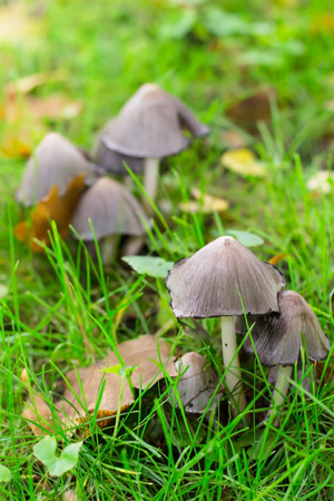 poisonous mushroom on a forest glade