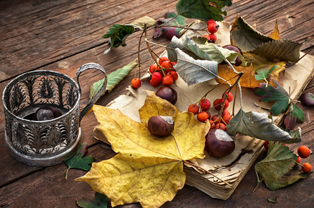 tacky: fallen autumn leaves on wooden table.Selective focus Stock Photo