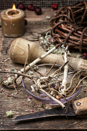 traditional healer: beam ligament healing herbs traditional medicine and pestle.Selective focus Stock Photo