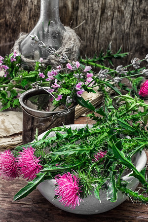 procurement of medicinal wild herbs thistle .Photo tinted.Selective focus
