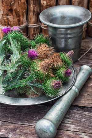 wise woman: Bright prickly Thistle buds collected for medicinal purposes in the iron bowl with mortar and pestle. Photo tinted. Stock Photo
