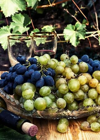 tinted: Bunches of ripe grapes of the two varieties.Photo tinted. Stock Photo