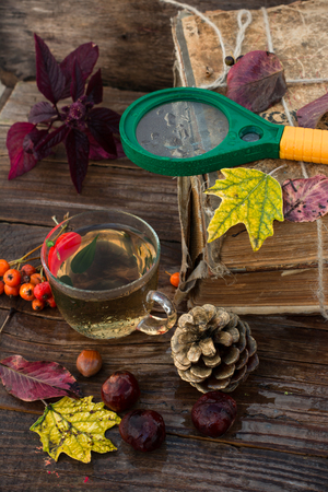 acorn tree: Autumn still life with autumn leaves,old books and wooden bucket