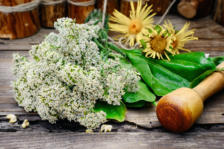 traditional healer: Bundle of healing herbs on the background of the mortar Stock Photo