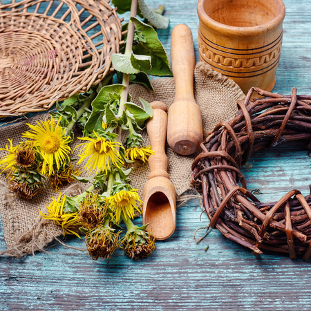 Healing stems with flowers of inula folk medicine and quackery
