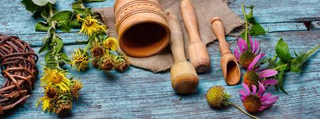 expectorant: Summer medicinal plant inula and echinacea in the popular recipes