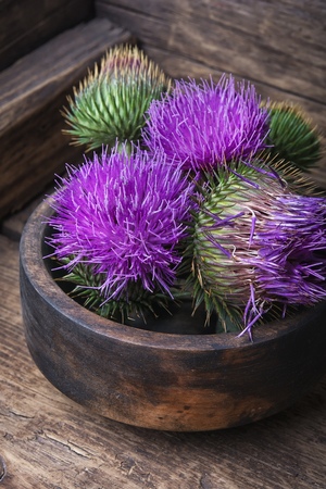 Silybum marianum.Wild medicinal plant thistle on wooden background Stock Photo