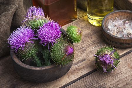 variegated: Wild medicinal plant thistle on wooden background.Milk Thistle plant