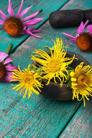 Flowers of healing elecampane in mortar with pestle Stock Photo