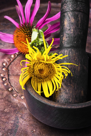 Herbs medicine,healing elecampane in mortar with pestle